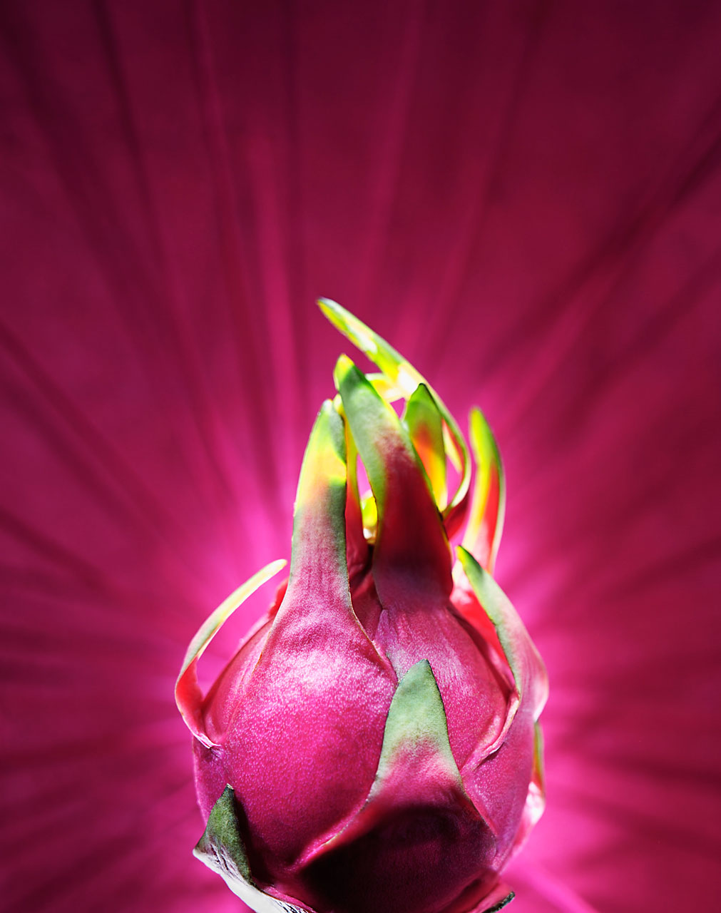 Sabine-Scheer-food-photograpy-pitahaya-dragon-fruit