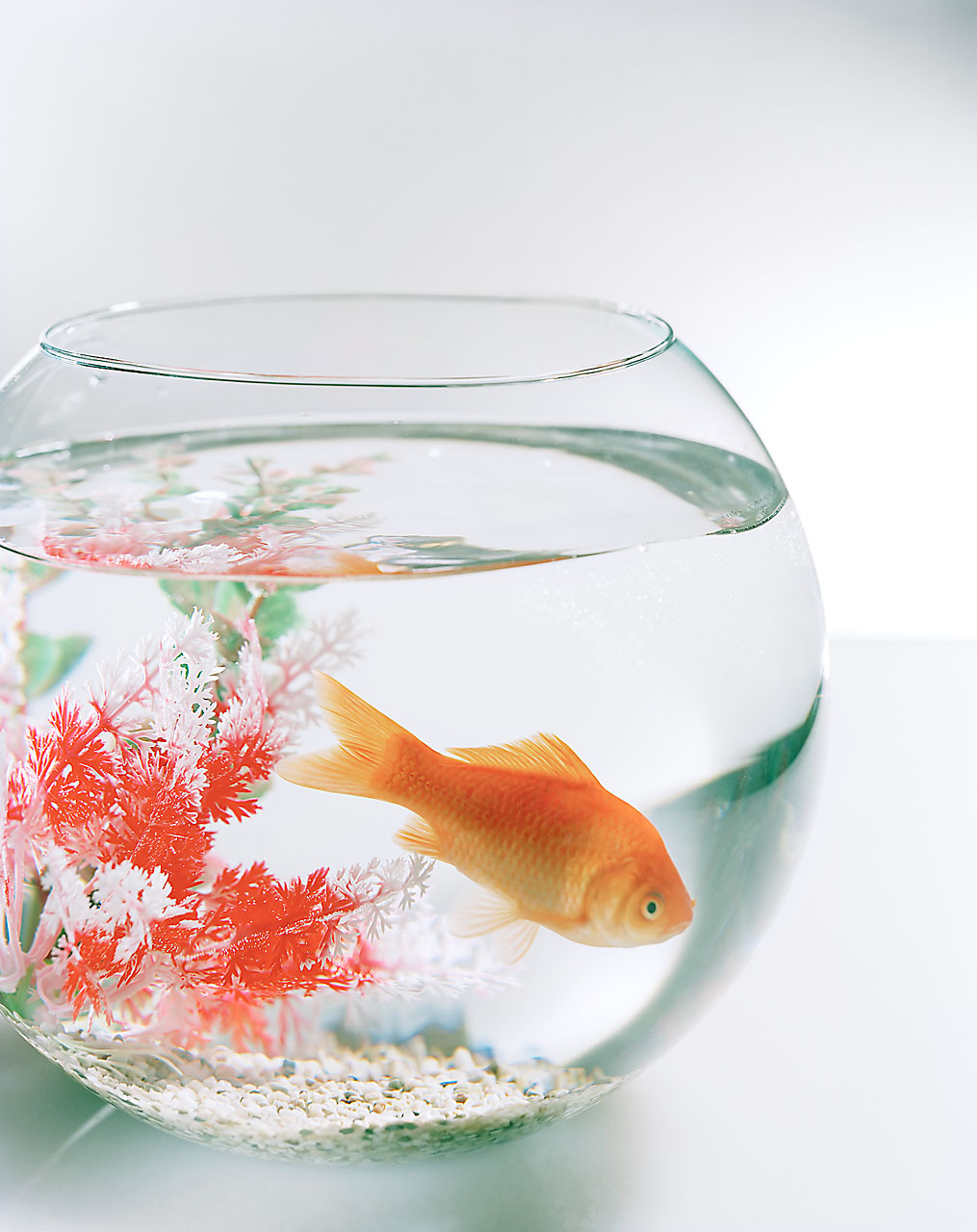 Sabine-Scheer-fotodesign-goldfischglas-fish-bowl