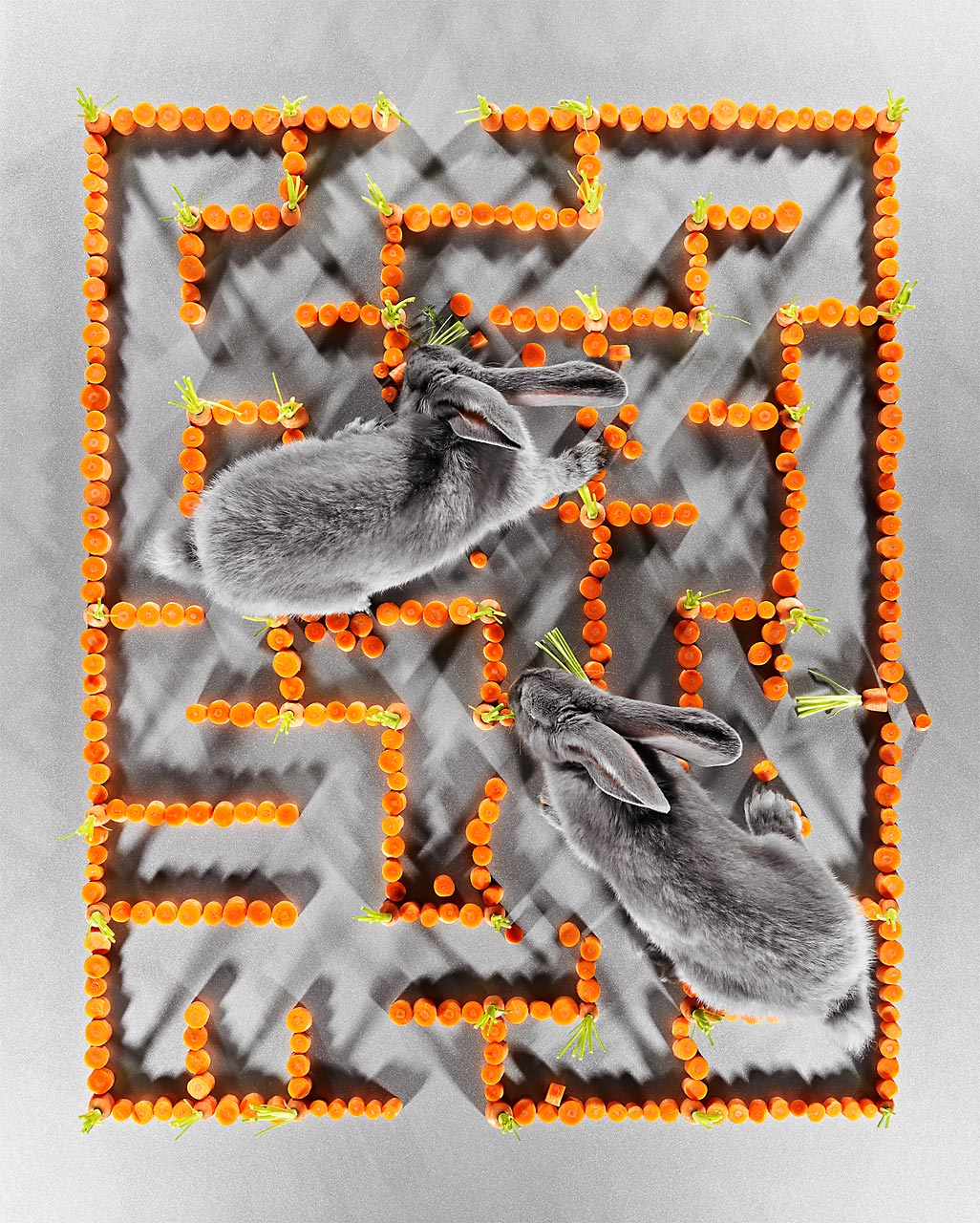 Sabine-Scheer-labyrinth-rabbit