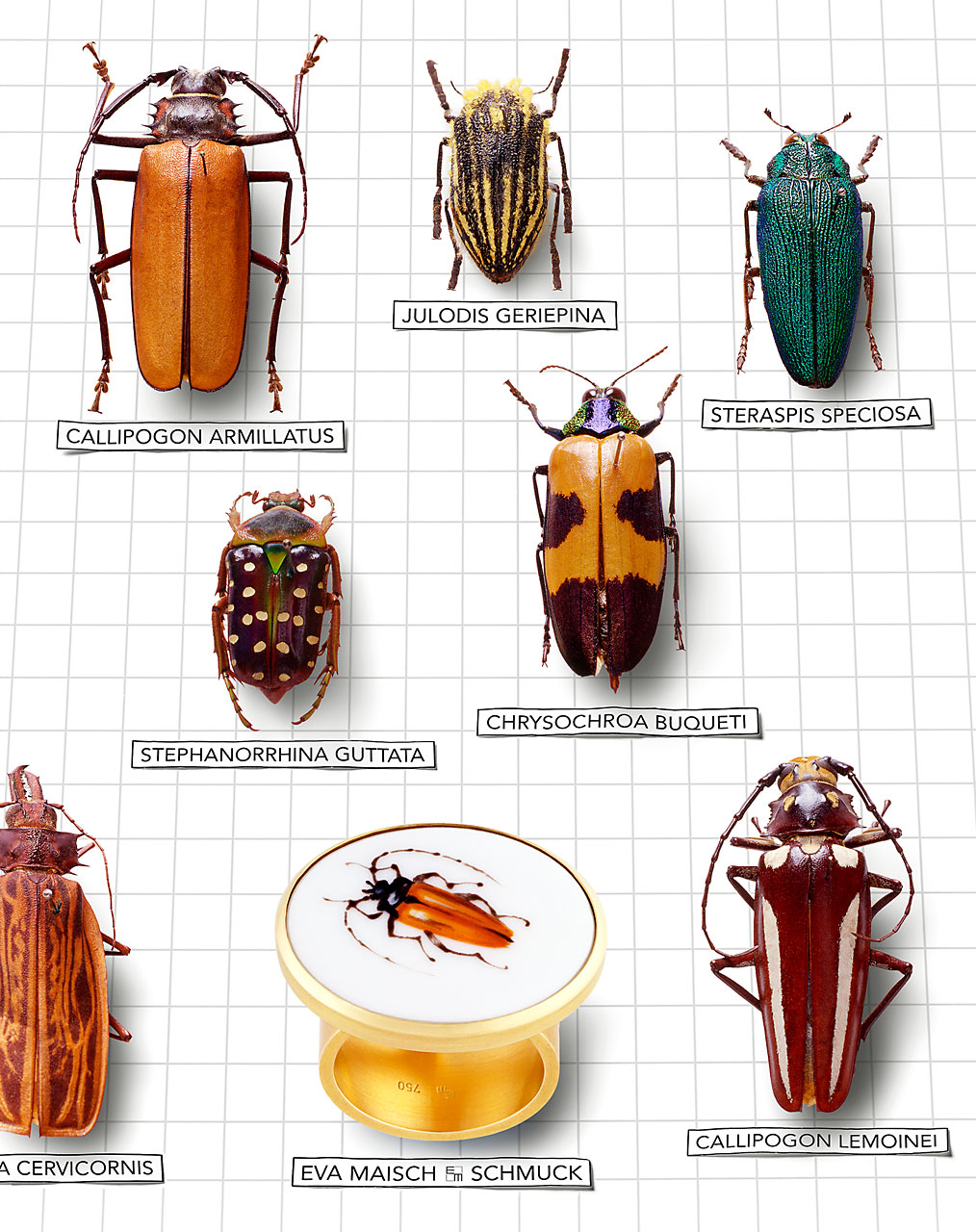 beetle-collection-Sabine-Scheer-still-life-photography