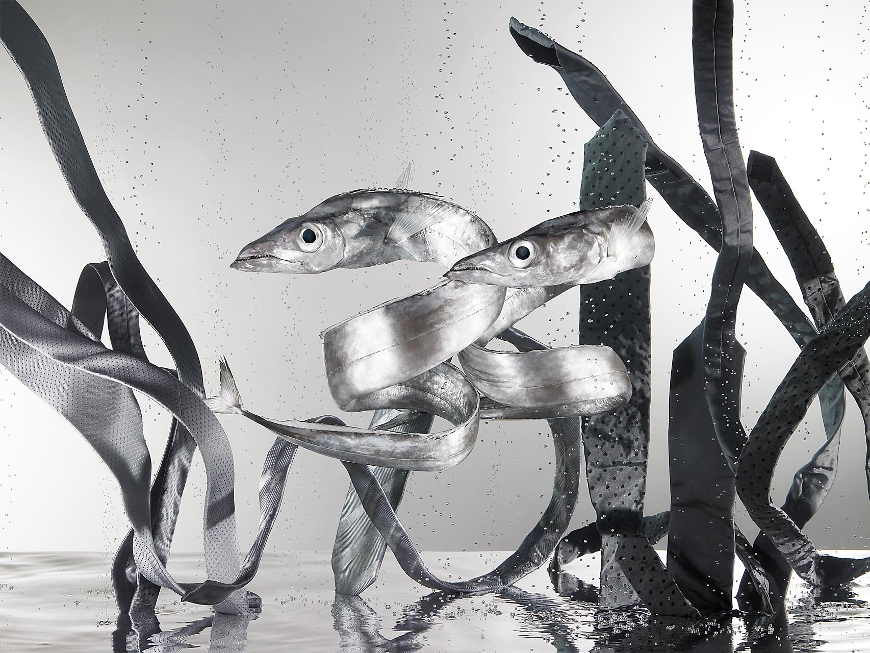 fashion-fish-Sabine-Scheer-still-life